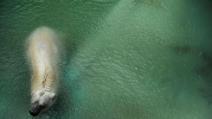 """L'orso bianco """"Arturo"""" resterà nello zoo di Mendoza in Argentina"""