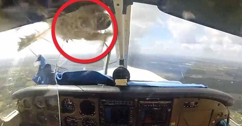 Atterraggio d 39 emergenza l 39 uccello rompe il vetro dell 39 aereo - Si puo portare l ombrello in aereo ...