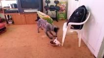Il cagnolino difende il suo pasto