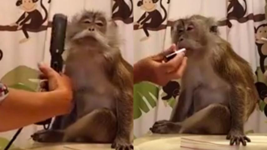 La Scimmia Che Ama Le Coccole E Il Make Up Si Prepara Così Per Il
