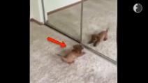 Il cagnolino è convinto di aver trovato un nuovo amico: la sua reazione è adorabile