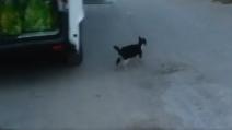 Terremoto Accumoli, la gattina con la coda tagliata sfama i cuccioli