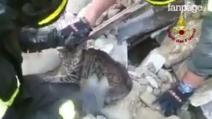 Ancora viva dopo 17 giorni sotto le macerie: la gatta salvata dai Vigili del Fuoco