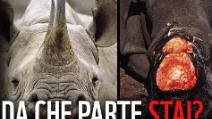 Rinoceronte trovato morto al centro di Milano