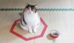 Perchè i gatti sono attratti dai cerchi?