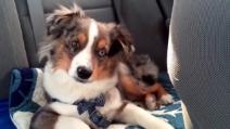 """Il cane si sveglia appena ascolta alla radio la hit di Frozen """"let it go"""""""
