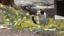 Tunceli, un gatto nasce con tre zampe la comunità si attiva per aiutarlo