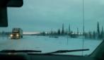 Canada, il taxi incontra una mandria di bisonti