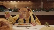 13 cani e un gatto consumano a tavola il pranzo di Natale
