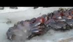 Cosa succede se si versa della lava incandescente su una lastra di ghiaccio
