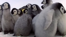 I 10 animali più teneri del 2014