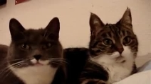 """I due gatti che """"parlano"""" come due vecchi amici: cosa si saranno detti?"""