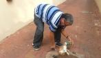 Il gatto rimane con la testa incastrata nella lattina, un uomo lo libera così