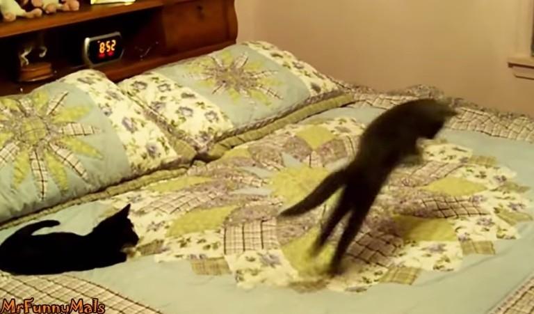 Letto Ad Acqua Pro E Contro : Come reagiscono i gatti sul materasso ad acqua quello che fanno