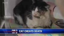 Seppellisce il suo gatto che credeva morto, lui resuscita dopo 5 giorni