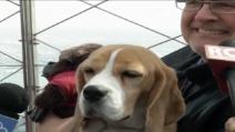 Miss P., il cane più bello del mondo posa sull'Empire State Building
