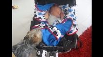 Riprende il suo cane mentre fa qualcosa di insolito per il bebé