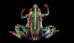 """The Frog"", l'illusione dell'artista del body painting Johannes Stötter"
