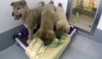 Elly, il cucciolo destinato al commercio di carne salvato insieme ai suoi fratelli