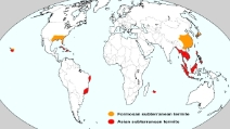 Le super termiti ibride