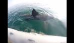 Incontro ravvicinato nel Mar Adriatico con uno squalo di 8 metri