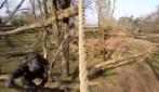 Il drone li riprende dall'alto quando uno degli scimpanzè reagisce così
