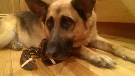 Razze di cane ecco chi il pastore tedesco for Cucinare definizione