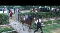 esibizione equestre alle capanelle del 7 6 2014 1° video