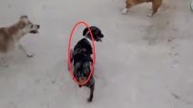 Il modo di correre di questo cane vi emozionerà: ecco il perché