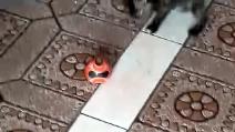https   youmedia.fanpage.it video ad VZM4A-Sw9Py8OPBx https ... 662d629b7fb