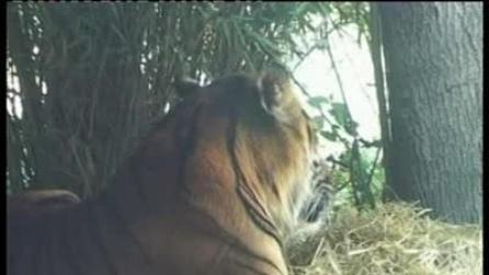 Zoo di Londra - Mammiferi e animali vari