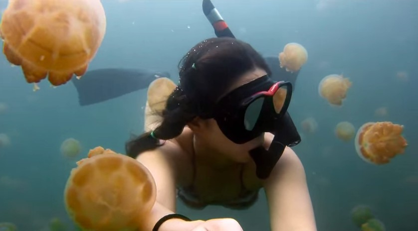 Si tuffa tra milioni di meduse ed ecco cosa succede