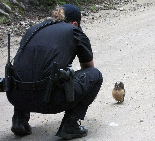 """La poliziotta dice """"ciao"""" al piccolo gufo e sentite lui come """"risponde"""""""