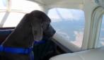 """""""Il cane nella stiva no!"""": la polizia sale a bordo e porta via la donna (e il cane)"""