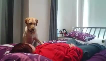 Il cane che avvisa la padrona 15 minuti prima della crisi epilettica: un dono miracoloso