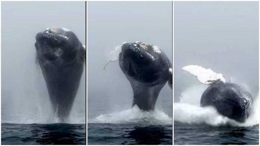 """La grossa balena salta fuori dall'acqua e """"saluta"""" i turisti"""