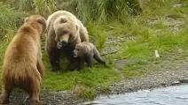 Mamma orso disposta a tutto per difendere il suo cucciolo