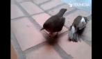 Chi ha detto che gli uccelli non provano sentimenti?