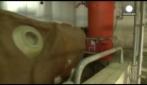 Le mucche con fistula ruminale