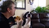 Vuole il sandwich del suo padrone: ecco come cerca di convincerlo