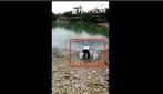 Rovescia due secchi nel laghetto: ma guardate dopo cos'accade
