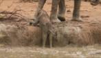Tutto l'amore di mamma elefante che salva il suo cucciolo in difficoltà