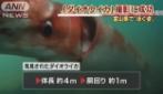 È lungo ben 4 metri e ha un aspetto spaventoso: ecco cosa è stato scoperto nelle acque del Giappone