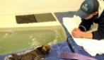 Questo cucciolo di otaria appena nato sarà la cosa più dolce che abbiate mai visto