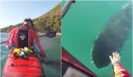 Un'amicizia lunga 5 anni: la storia dell'orca e del kayakista