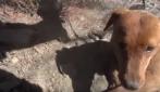 Li trovano infreddoliti su una montagna: il salvataggio spettacolare dei cuccioli