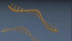 dna micro array animation