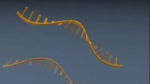 dna micro array animation