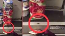 Scarafaggi ad alta quota nella cucina di un aereo: il video di un passeggero