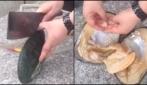 Apre un mollusco gigante: ecco cosa trova al suo interno